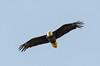 Eagle NM 053016  DSC_9193