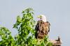 Eagle NM 053016  DSC_9102