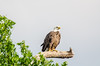 Eagle NM 053016  DSC_9073