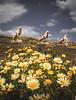 Ancient Sentinels - Delos, Greece