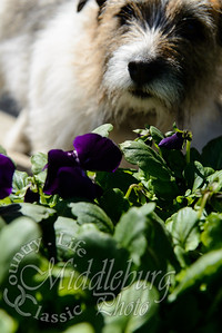 Charlie in the flowers at The Village Green