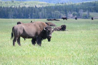 Tetons & Yellowstone-251