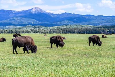 Tetons & Yellowstone-200