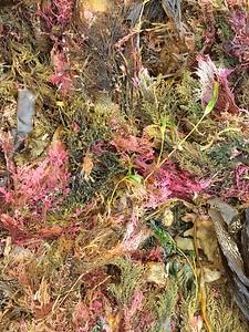 Day 343: Seaweed mash up