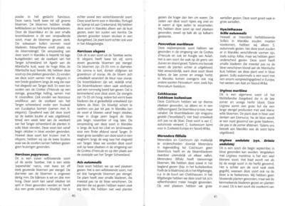 De herfstbloeiende flora van NW Marocco (NRV no 101 Februari 2011) p. 40-41