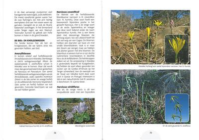 De herfstbloeiende flora van NW Marocco (NRV no 101 Februari 2011) p. 38 - 39