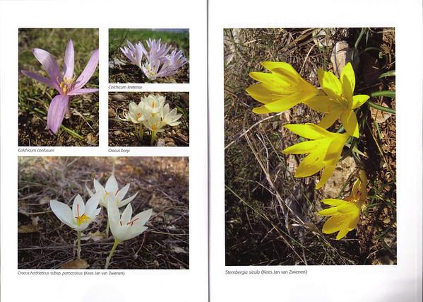 Folium Alpinum, journal of the Dutch Alpine Garden Society