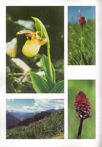 x Gymnigritella suaveolens (rechtsboven en rechtsonder), Nigritella nigra en Gymnadenia conopsea met op de achtergrond Val di Fassa, Dolomites (linksonder), p18
