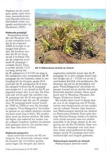 p235, Succulenta, oktober 2010