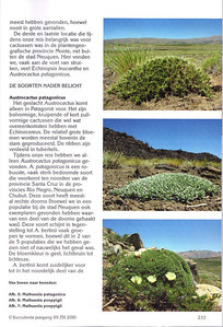 p233, Succulenta, oktober 2010