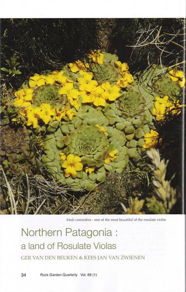 Northern Patagonia: a land of Rosulate Violas, Ger van den Beuken and Kees Jan van Zwienen, Winter 2010/2011