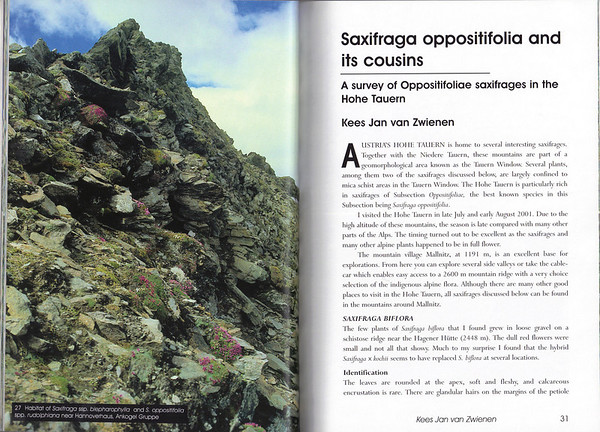 Saxifraga oppositifolia and its cousins, A survey of Oppositifoliae saxifrages in the Hohe Tauern, by Kees Jan van Zwienen, July 2003
