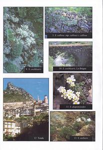 Summer 2003, photograph 10 (Saxifraga cochlearis bridge) by Kees Jan van Zwienen, photograph 11 (Saxifraga diapensioides at Col de  Veillos) by Ad van Zwienen