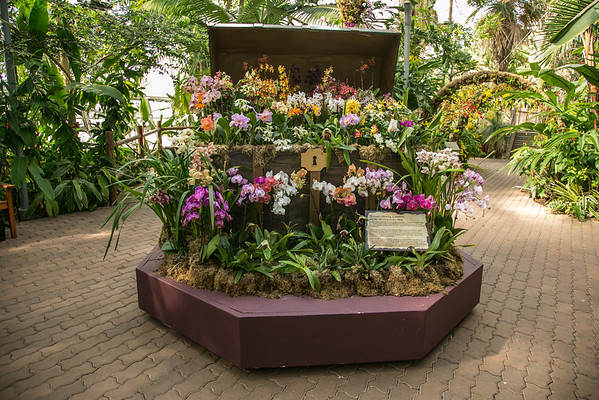 Orchid Show 2015