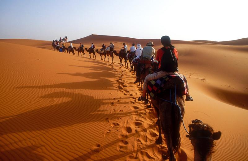 A Camel Caravan Crosses the Sahara Desert in Morocco