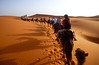 A Camel Caravan Crosses the Sahara Desert in Morocco