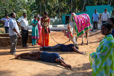 Roadside event: new Temple being celebrated by parishioners and Cow.
