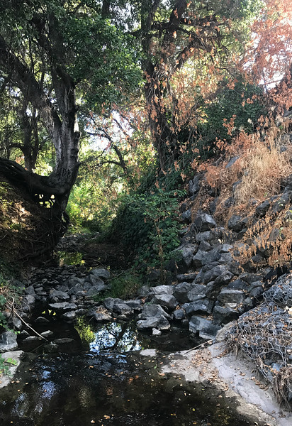 This is one of the small creeks that flow into the main channel. There are several of these along the channel, and the boys who took a raft into the channel and drowned used one of these feeder creeks to gain access.
