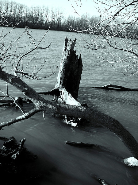 Jagged tree trunk jutting out of choppy waters.