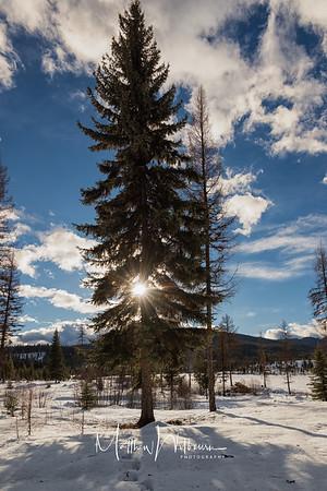 Sunburst in The Evergreen