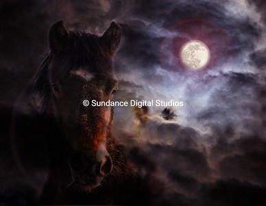 Midnight Mustang