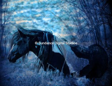 Black & White stallion in misty forest