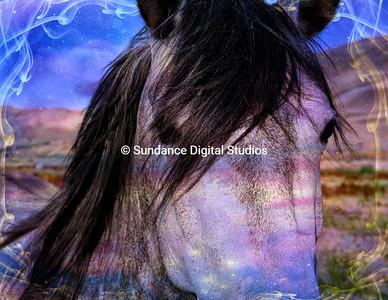 Mustang Dreaming