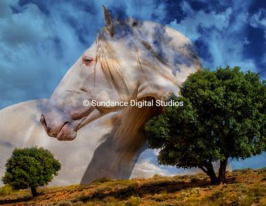 Pinions and White Stallion