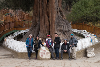 Under King Cypress Tree, Linzhi, Tibet