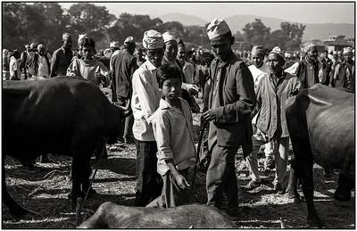Vallée de Katmandou - marché aux bestiaux