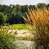 Gruener's landscape-15