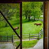 Manifesto Farm- Bell Acres-159