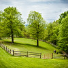 Manifesto Farm- Bell Acres-205