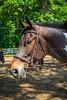 2015 Sewickley Hunt Horse Show-Saturday-2013