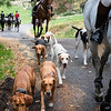Sewickley Hunt 2019 Opening meet-32
