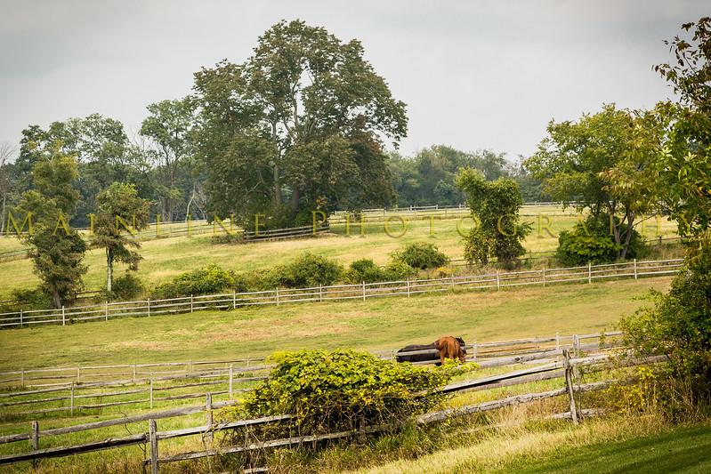 Barberry Farm-1