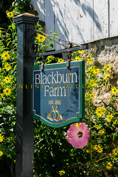 Blackburn Farm - Sewickley, PA-6