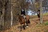 Fox Hunt Nov 9, 2013-310
