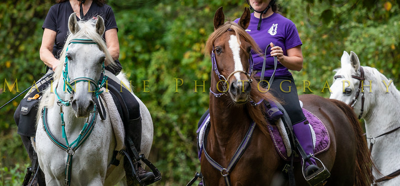 Sewickley Hunt Hunter Pace 2019-45