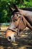 2015 Sewickley Hunt Horse Show-Saturday-2012
