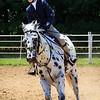 2016 SH Horse Show-345