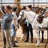 2019 Sewickley Hunt Horse Show-WVU-519