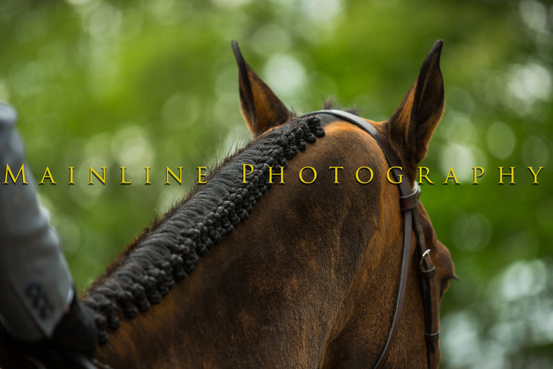 Sewickley Hunt Show May 2013-69-2