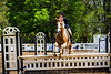 Sewickley Hunt Show May 2013-27-2