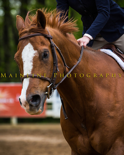 Sewickley Hunt Show May 2013-127-2
