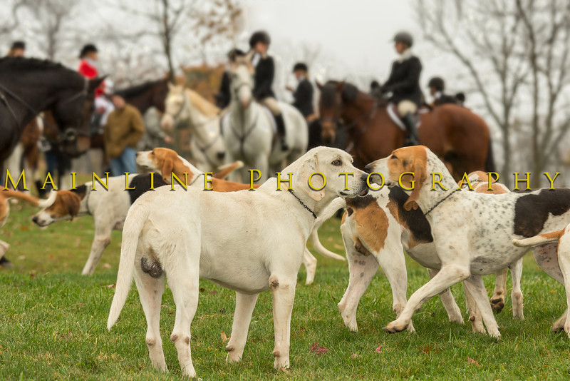 Sewickley Hunt Oct 2012 4a