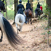 Sewickley Hunt 2019 Opening meet-41