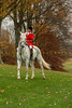 Sewickley Hunt Oct 2012-45