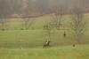 Sewickley Hunt Oct 2012-140