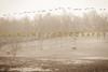 Sewickley Hunt Oct 2012-119-2